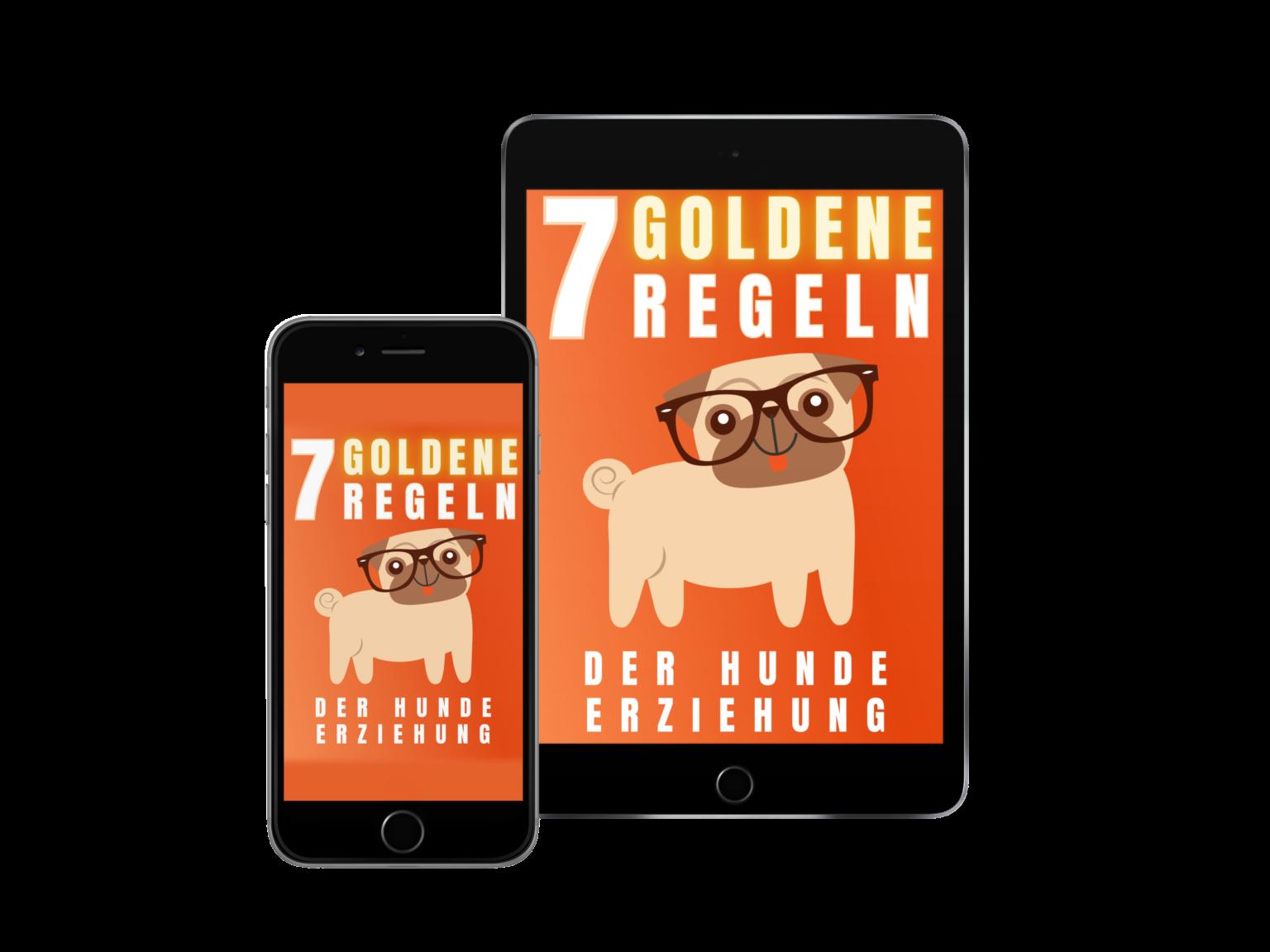 7 goldene Regeln der Hundeerziehung